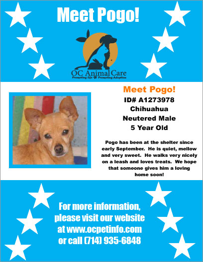 OC Animal Care Pet of the Week